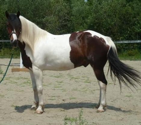 gelding2 (469x417)