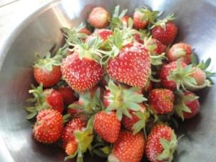 strawberries-001