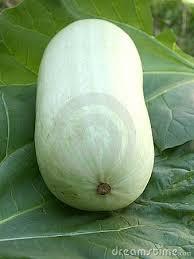 veggie Marrow