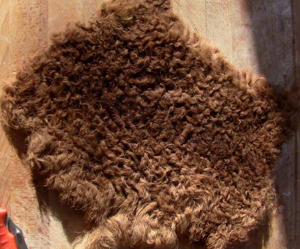 hair sheep newborn hide