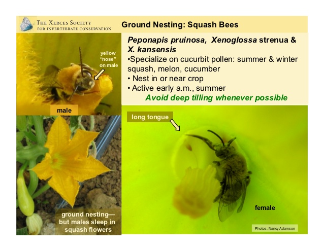 pollinator-conservation-on-small-farms-by-nancy-adamson-at-cfsa12-on-2628-oct-2012-cfsa12-48-638