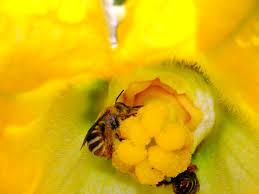 sq bee