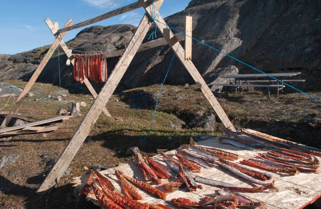 Inuk drying char the traditional way