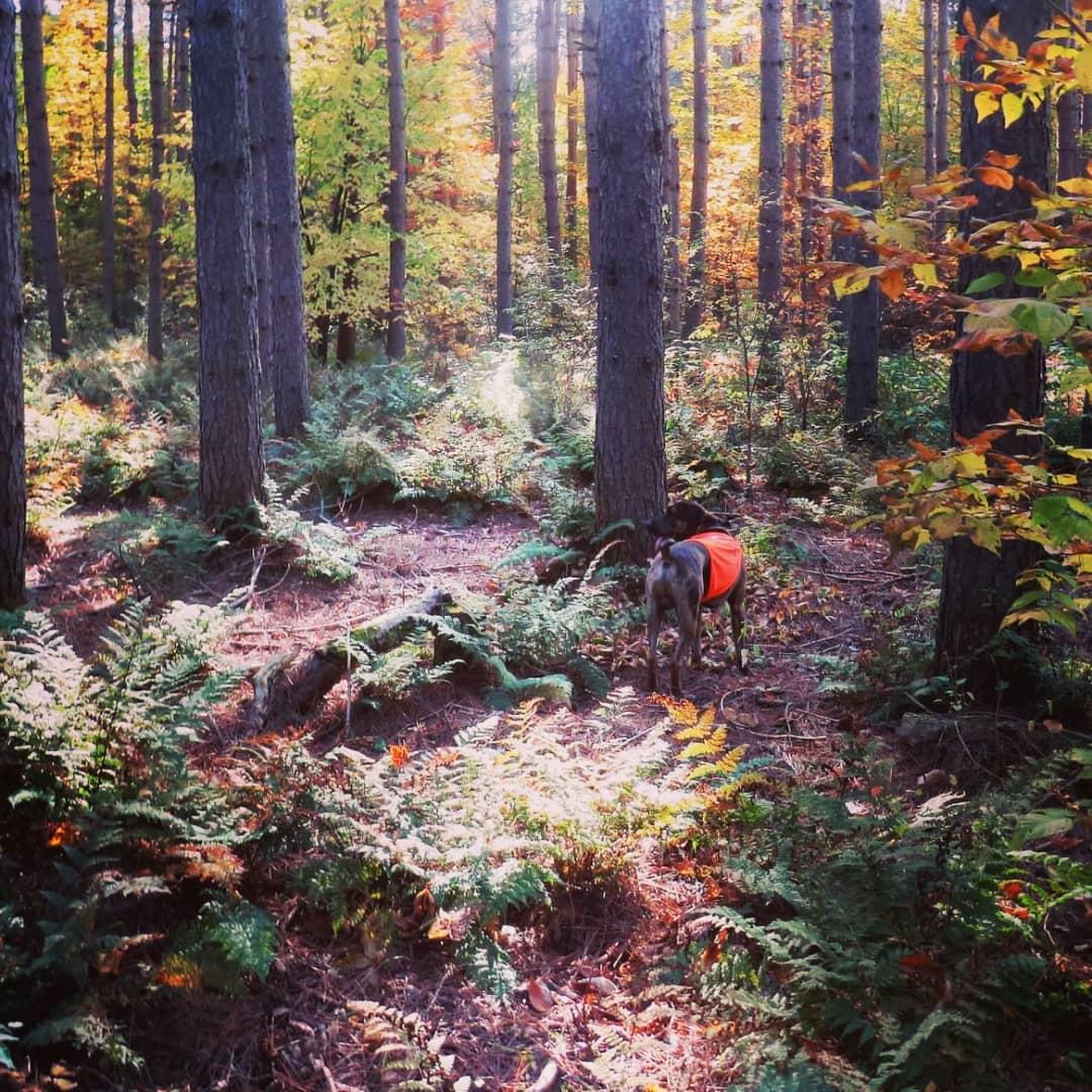 remmifallforest